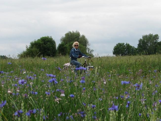 Noordoost Polen fietsen door korenvelden vol korenbloemen Agro Natura