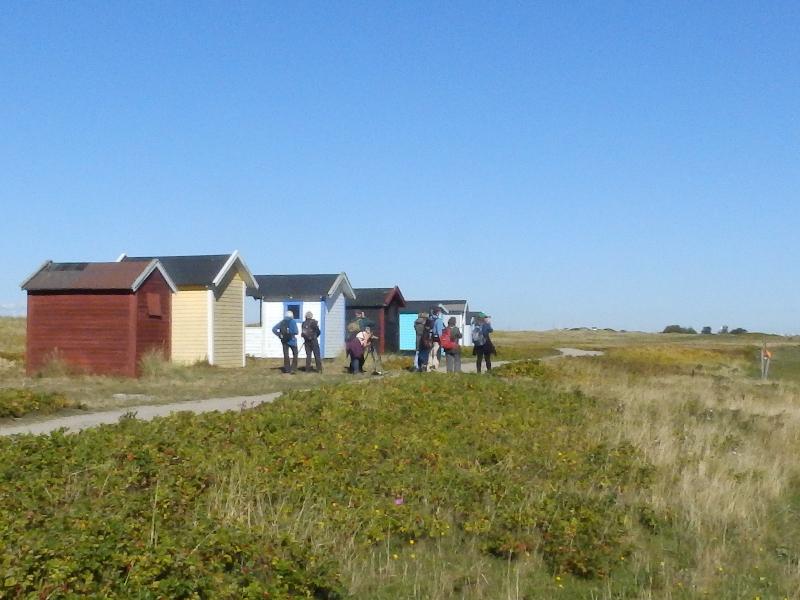 Falsterbo Strandhuisjes, Zuid Zweden. Vogelreis Agro Natura