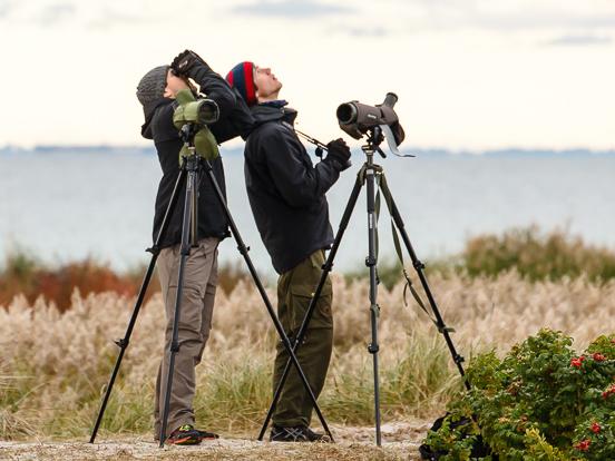 Vogeltrek kijken bij Falsterbo. Agro Natura vogelreis