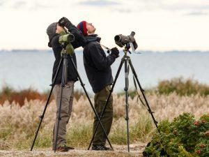 Vogeltrek kijken bij Nabben, Falsterbo, Zuid Zweden. Vogelreis Agro Natura