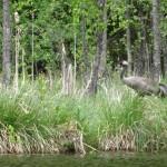 Kraanvogel gezien vanuit de kano, Agro Natura kanoreizen
