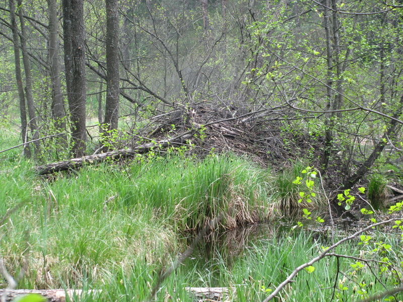Noordoost Polen, beverburcht in het Suwalki Landschapspark
