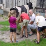 Boerderijvakantie noordoost Polen, koeien melken
