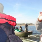 Polen vogelreis Oderdelta en Slonsk Agro Natura