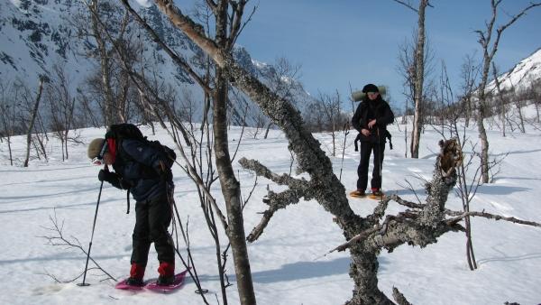 Sneeuwwandeltrektocht Hardangervidda Noorwegen. Agro Natura