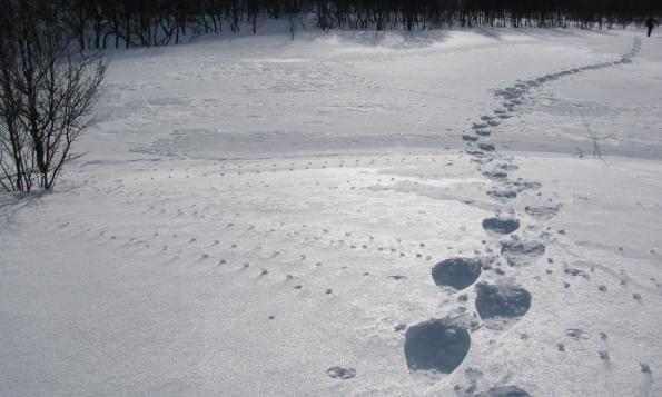 Noorwegen sneeuwwandelreis, sporen