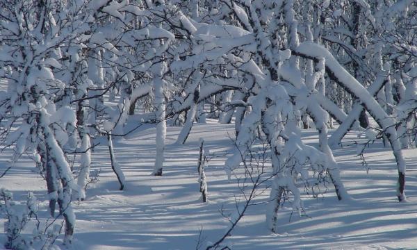 Noorwegen sneeuwwandelen Rauland