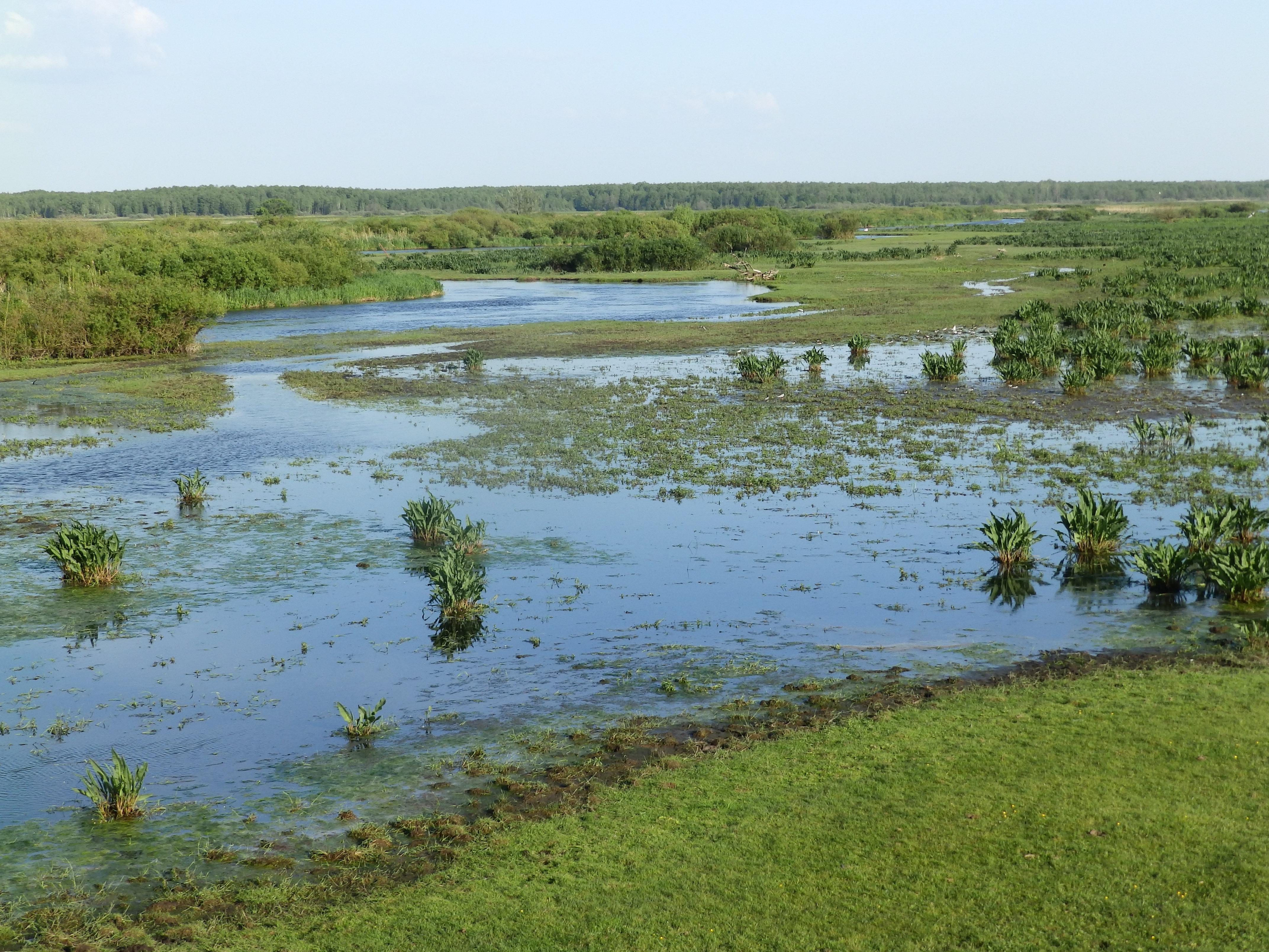 In de Biebrzamoerassen, Agro Natura Noordoost Polen specialist