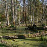 Prachtig bos in het bosgebied van Bialowieza. Agro Natura reizen