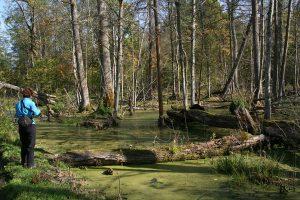 Polen special: natuurreis Noordoost Polen, Biebrza en Bialowieza