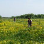 Wandelen in de Biebrzamoerassen, wandelreis Agro Natura