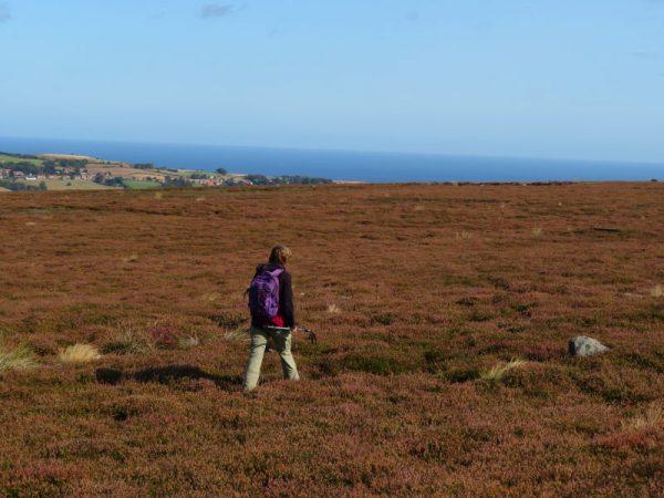 Boven op de Moors met de Noordzee op de achtergrond