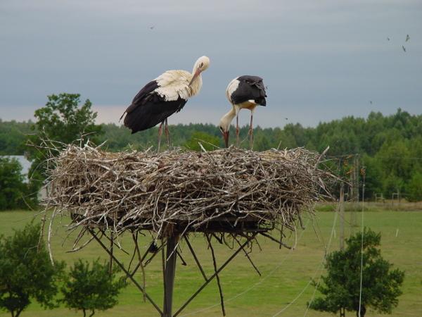 Noordoost Polen overal ooievaars Agro Natura