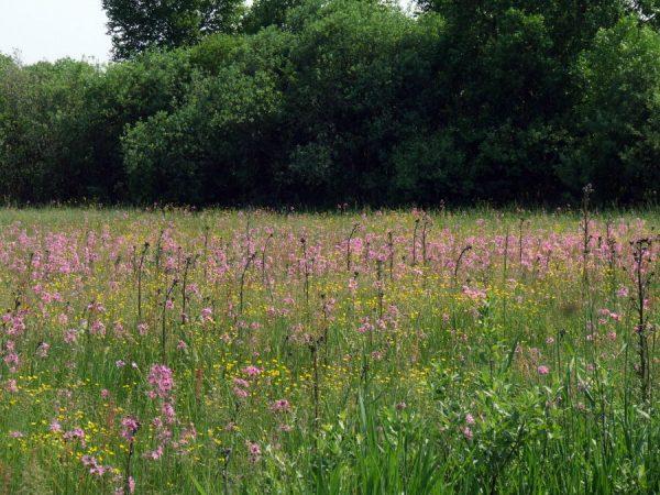 Weide vol bloemenpracht, Noordoost Polen, agronatura.nl