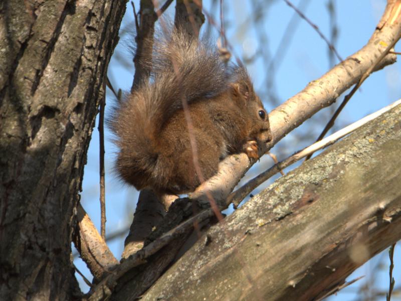 Heerlijk zonnende eekhoorn