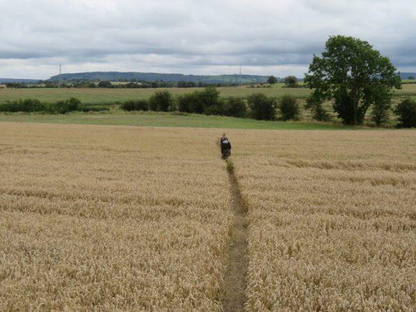De eerste wandeldag, de Yorkshire Moors in zicht