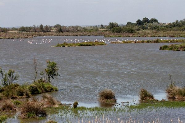 Flamingo's in de Camargue