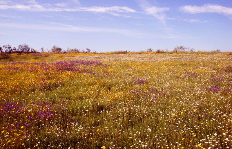 Bloemenzee in de Extremadura