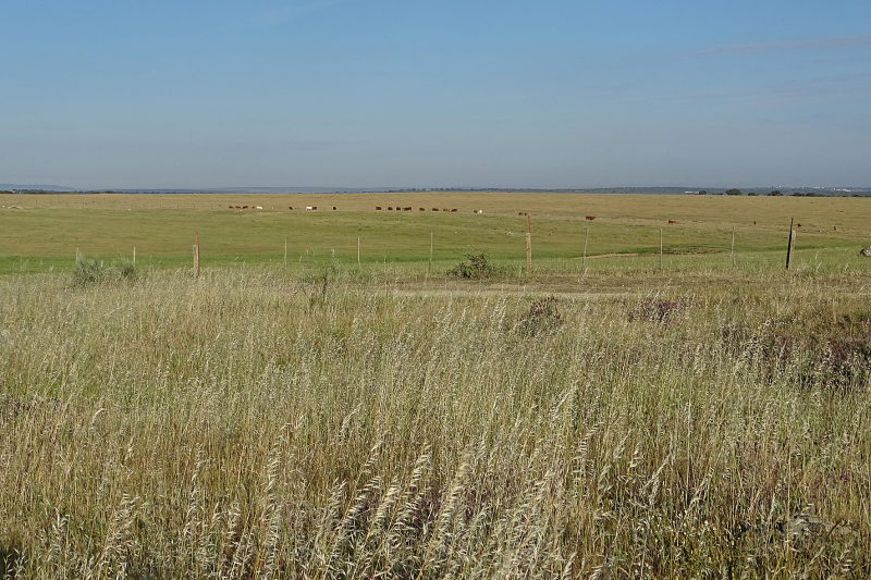 Steppe in Extremadura