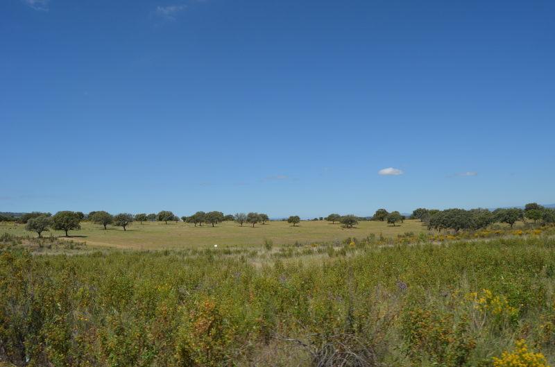 Landschap in Extremadura, Dehaze en steppe