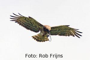 Spanje: vogelreis Picos de Europa en Santona